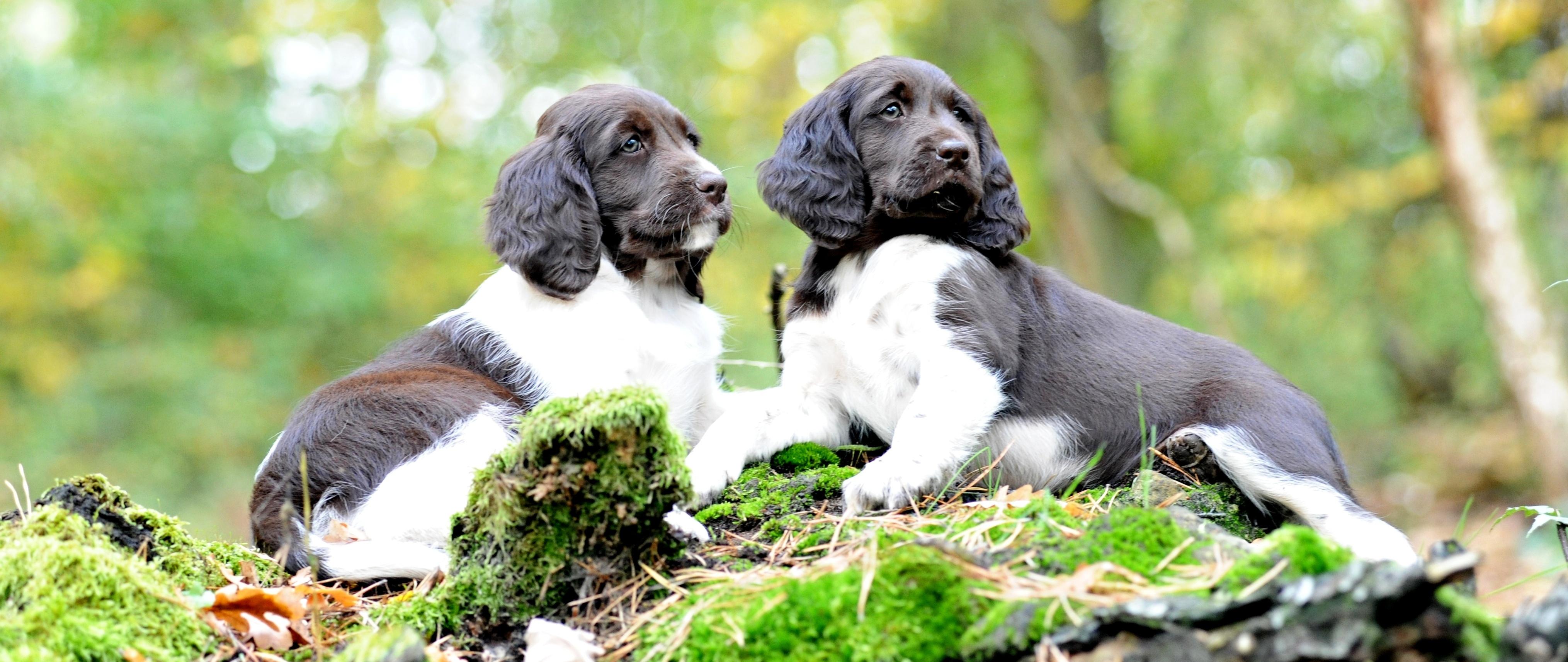 Chovní psi a chovné feny